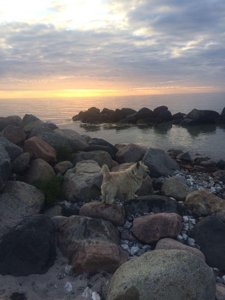 Sommeraften, Kattegat strand , Rørvig 2016