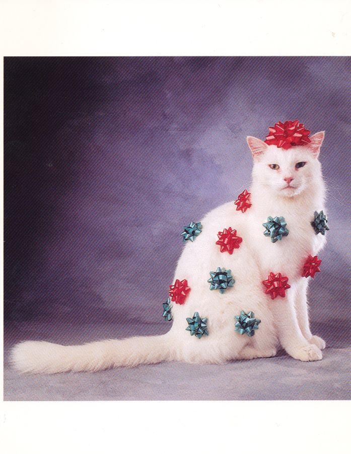 Festive Cat - from a card I sent many holidays ago...