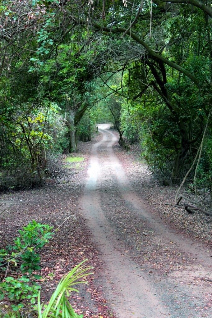 Dirt road leading through the dense coastal forest to the beach. Mtunzini, South Africa