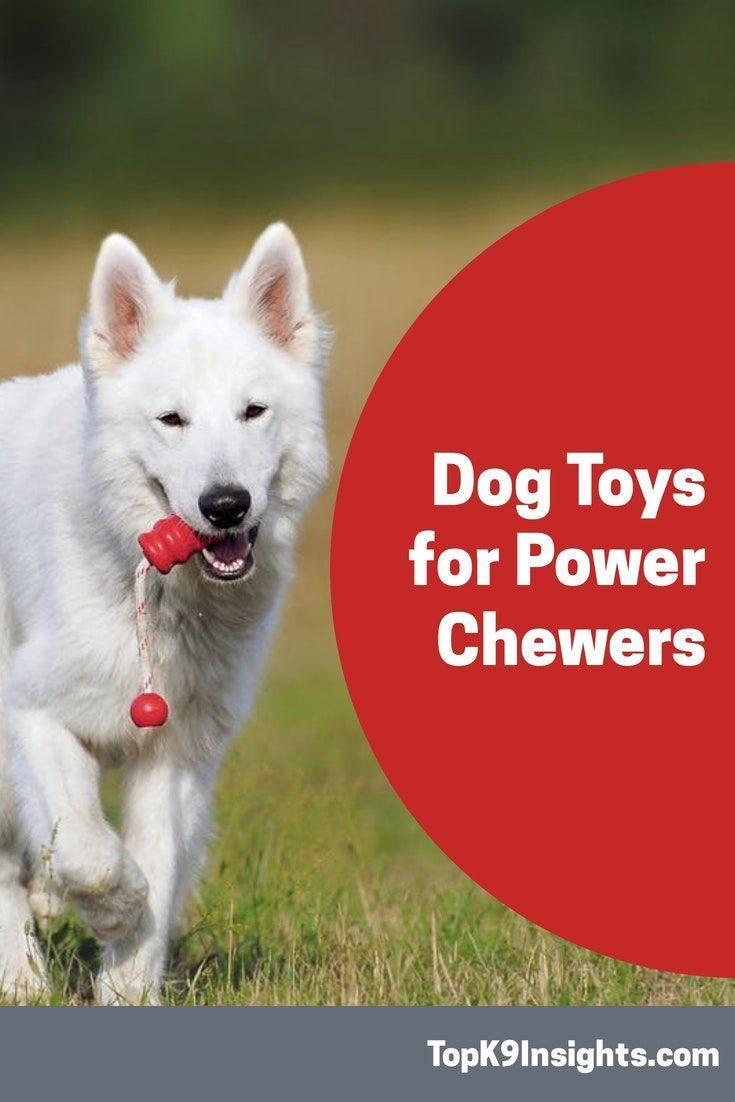 Our List Of Tested Indestructible Dog Toys For Aggressive Power