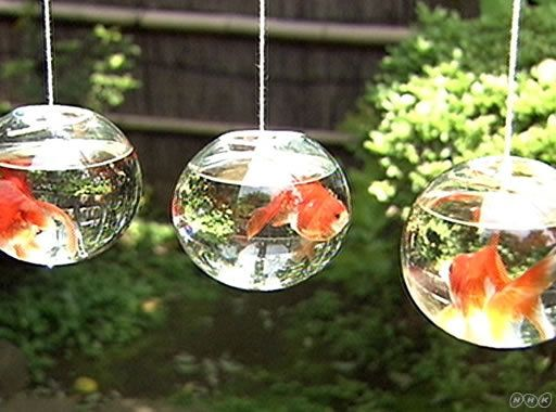 It is a goldfishs in the porch