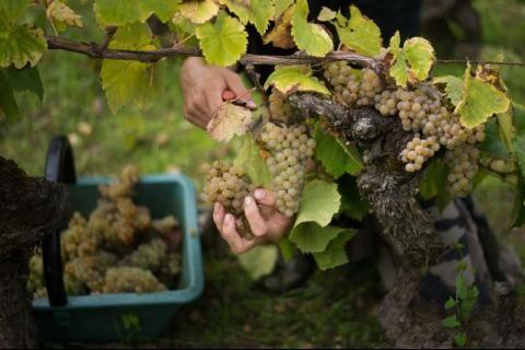 Ouverture des noms de domaine en .vin et .wine