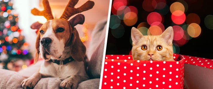 En esta temporada de fiestas, mientras está ocupado decorando, cocinando y envolviendo regalos, recuerde estar atento a las tentaciones navideñas para sus mascotas. https://go.usa.gov/xnn4s