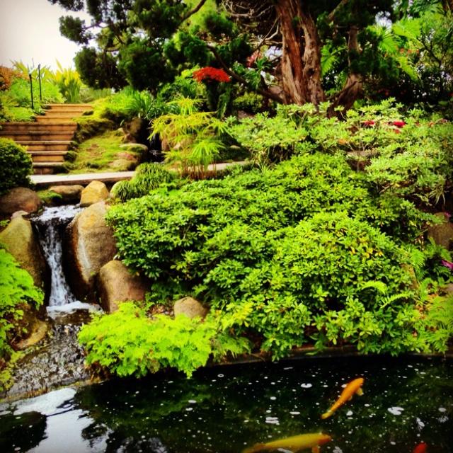 Encinitas Meditation Gardens Wedding Fasci Garden