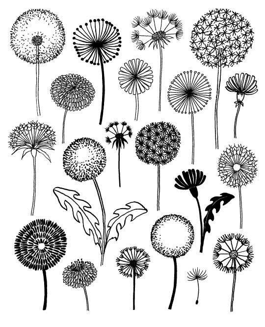 « Pissenlits » sont une estampe tirée directement de lun des pages de mon livre, « Vingt façons pour dessiner un arbre ». Cette impression est une: