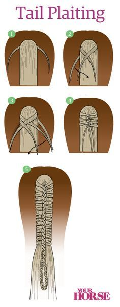 How to plait a horses tail.