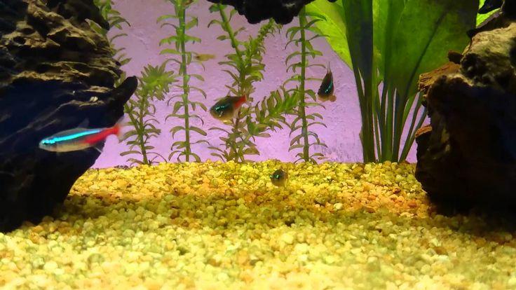 Aquarium eau douce 100 litres