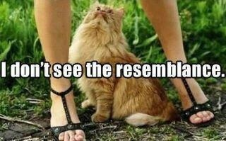 How highly inappropriate but hilarious: Kitty Cat, Funny Pics, Funny Shit, Funny Captions, Funny Pictures, Funny Cat, Animal Humor, Funny Stuff, Funny Photo