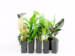Best 10+ Buy indoor plants online ideas on Pinterest | Indoor ...
