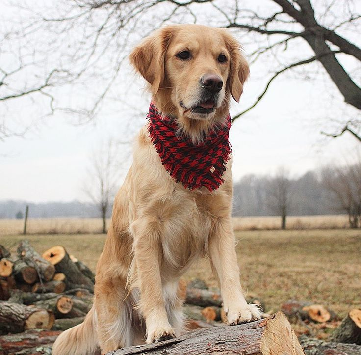 Meet the DIOR, our red houndstooth hand-fringed luxury dog scarf. This fabric doesn't exist anywhere else (we snatched up the last of it), and once it sells out, it's gone forever! We picture the DIOR