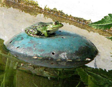 Frosch im botanischen Garten Berlin