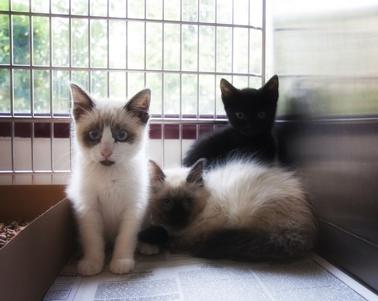 All About Cat Boarding Services