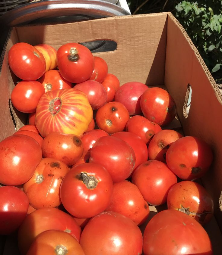 #Alba has its truffles, #Périgord its foie gras, #NewZealand its lamb, and #Jersey, right now, its big, beautiful, beefsteak #tomatoes - #LaborDay