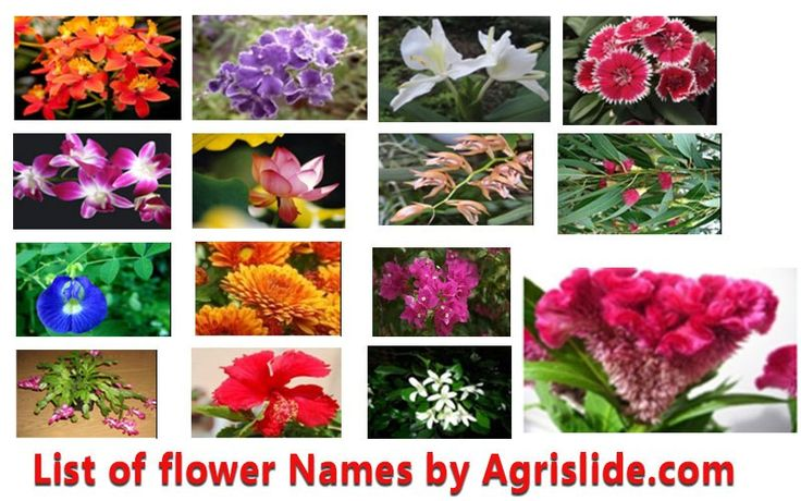 list of flower names with scientific name, family and pictures, Beautiful flower