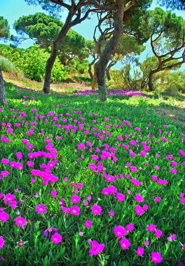 Flowery May at El Portil, Huelva, Andalucía_ Spain