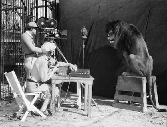 <p>Leo the Lion gets ready for his close-up as the Metro-Goldwyn-Mayer mascot is filmed for the stud... - Purpleclover.com