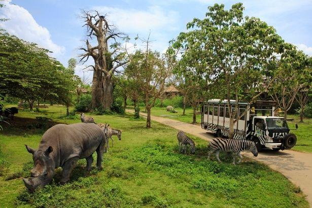 Bali Safari and Marine Park memiliki ratusan hewan dari 60 spesies berbeda, termasuk beberapa diantaranya merupakan hewan yang dilindungi dan terancam punah