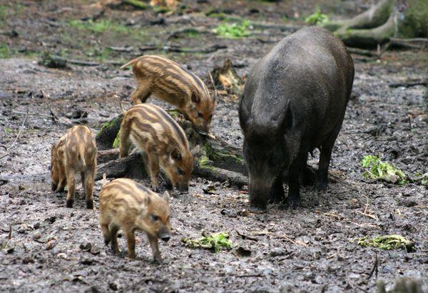 Der Wildpark Stückberg Eslarn #BaySF #Staatsforsten #Erholung #Ausflug #Sehenswürdigkeiten #Spazieren #Wandern #Flossenbürg