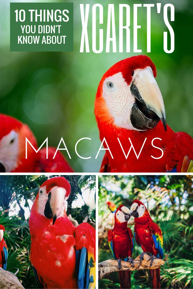 10 Things You Didn T Know About Xcaret S Macaws Mark Off Bucket List Pinterest Cancun