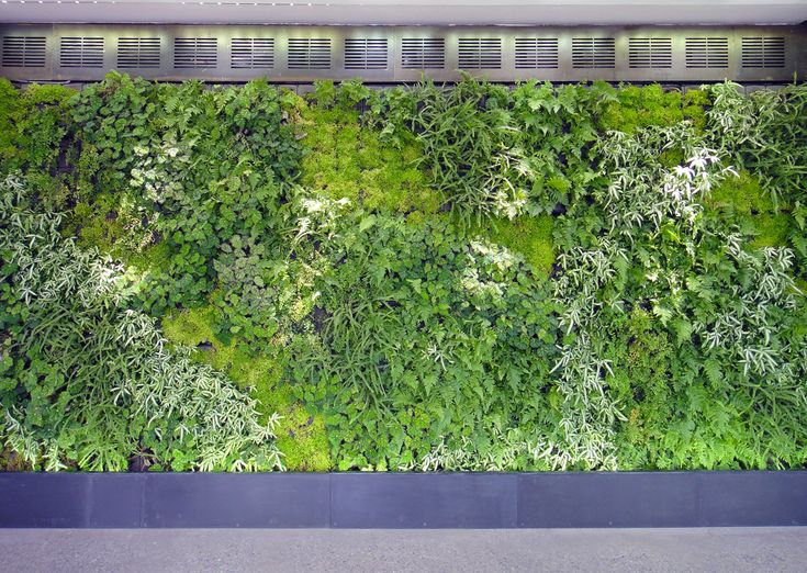 82 best images about green walls on pinterest green for Vertical green wall