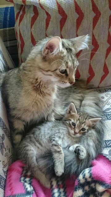 Şiva ve oğlu