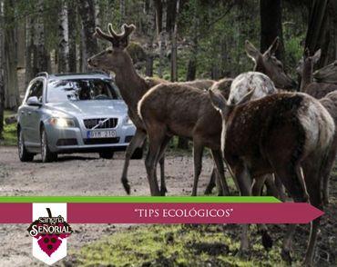 Si te encuentras a un animal silvestre durante tus vacaciones, no lo molestes; lo más seguro es que se aleje inmediatamente. Respetemos su hábitat.