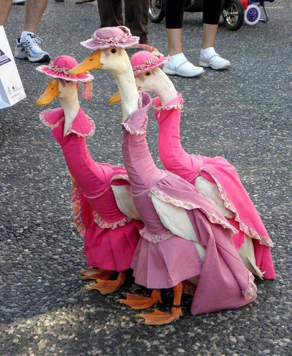 Mother gooose & friends...The Aristocats, Real Life, Dresses Up, Beatrix Potter, Ducks, Mothers Goo, Pink, Animal, Disney Movie