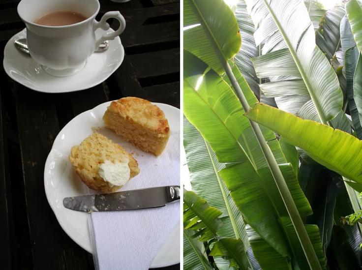 Scones and tea @ Agalico, Bangkok