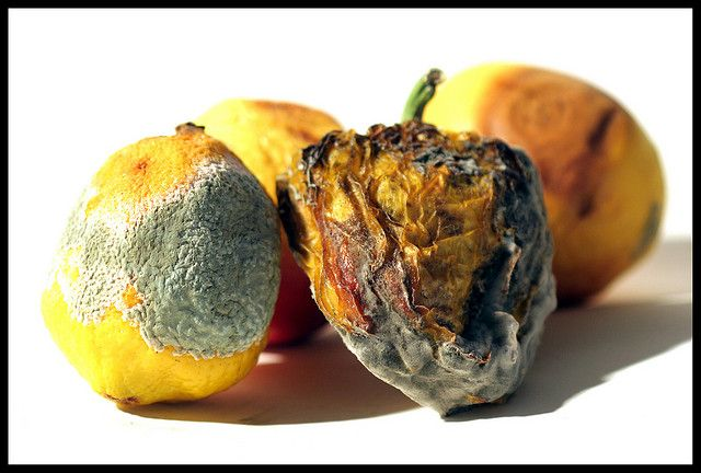 Rotting Fruit by Bartistuta, I think that rotting fruit could be a project because I could show how fruit starts of as being ripe and colourful and then after time it changes and gets mouldy. I could also show this with people by photographing young people and show how people age.