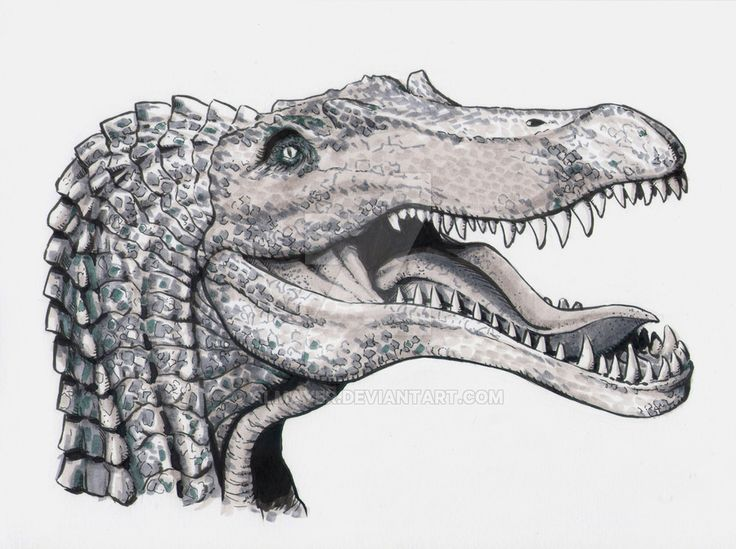 Spinosaurus head study by Almayer