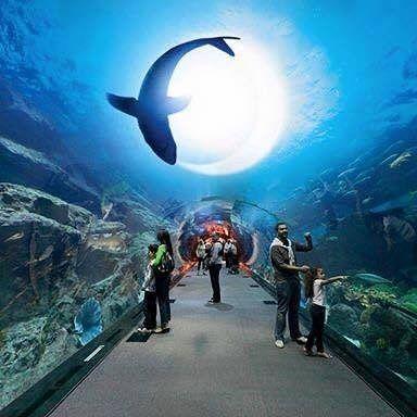 Ставь класс! #отдых #поездка #путешествие #туризм #аквариум #акула #черепаха #рыбки #фотографии #фото #природа #мир #весьмир #красота