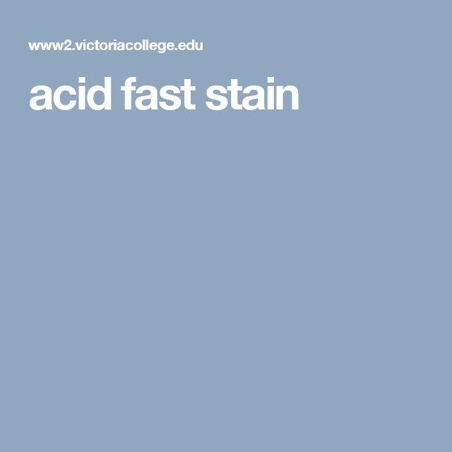 acid fast stain