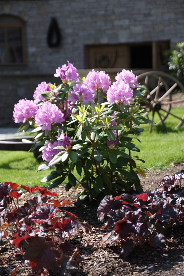 Kwiaty w naszym ogrodzie // Flowers in the gardren - Chochołowy Dwór, Jerzmanowice k. Krakowa  #hotel