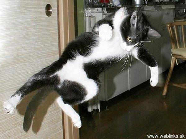 Gatti ninja all'attacco! Due video felini e divertenti perfetti per gattofili