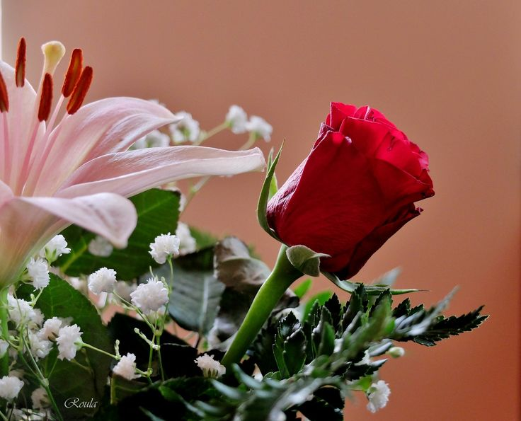red roses..