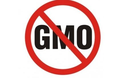 POLAND BECOMES EIGHTH EU NATION TO BAN DEADLY MONSANTO MAIZE. Poland has become the eighth EU member state to ban the cultivation of genetically modified (GM) crops. Seven other EU member states have already imposed bans on the cultivation of GM crops insanely approved by the European Food Safety Authority (EFSA) as safe: Austria, France, Germany, Hungary, Luxembourg, Greece and Bulgaria.