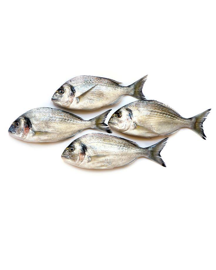 silvery fish | STILL (mary jo hoffman)