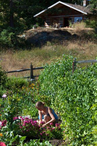 Cabin and Garden