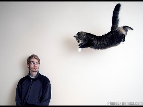 How To Photograph A FLYING CAT