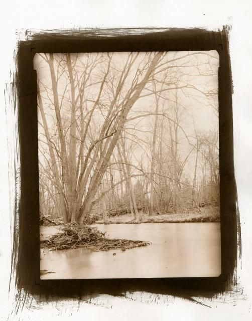 Vandyke Brown Printing Basics | Film Photography Project