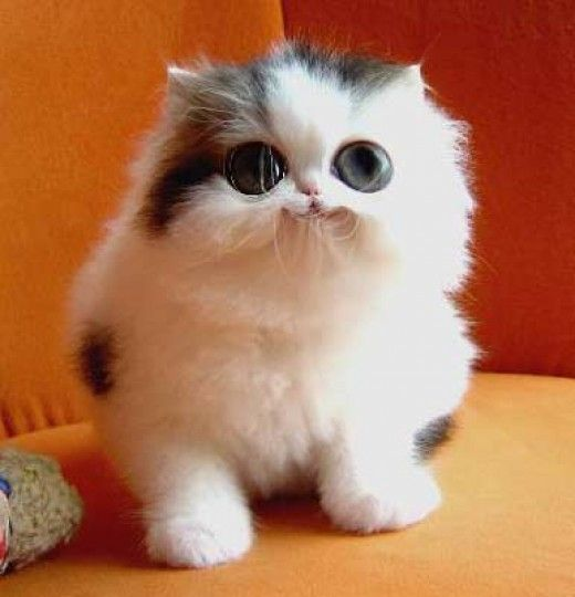 Cute cats, surely someone photo shopped his mouth, ya think lol