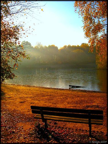 This is the lake on WIMBLEDON COMMON,LONDON,ENGLAND it looks stunning at all times of the year, I remember feeding the ducks and pond dipping here as a kid. I've been recently and it's as pretty as ever.