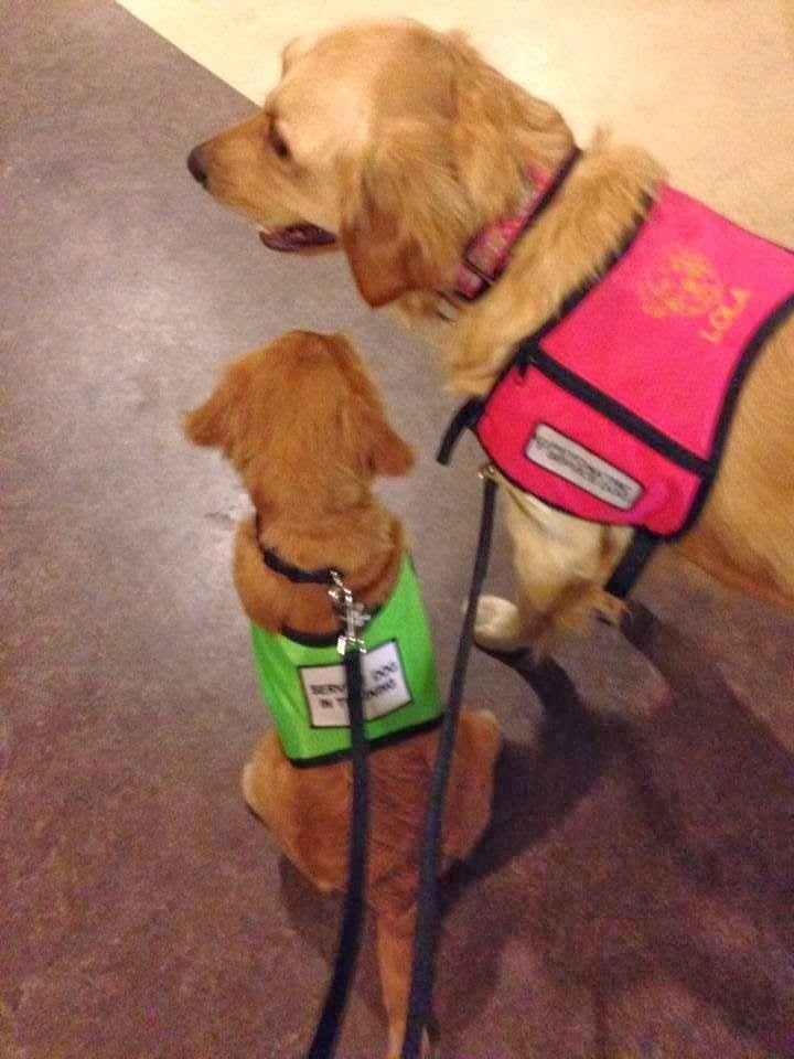 Psychiatric Service Dog Adoption