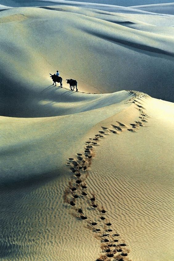Sand dunes of Mui Ne - Binh Thuan, Vietnam  Please like, share, repin or follow us on Pinterest to have more interesting things. Thanks. http://hoianfoodtour.com/