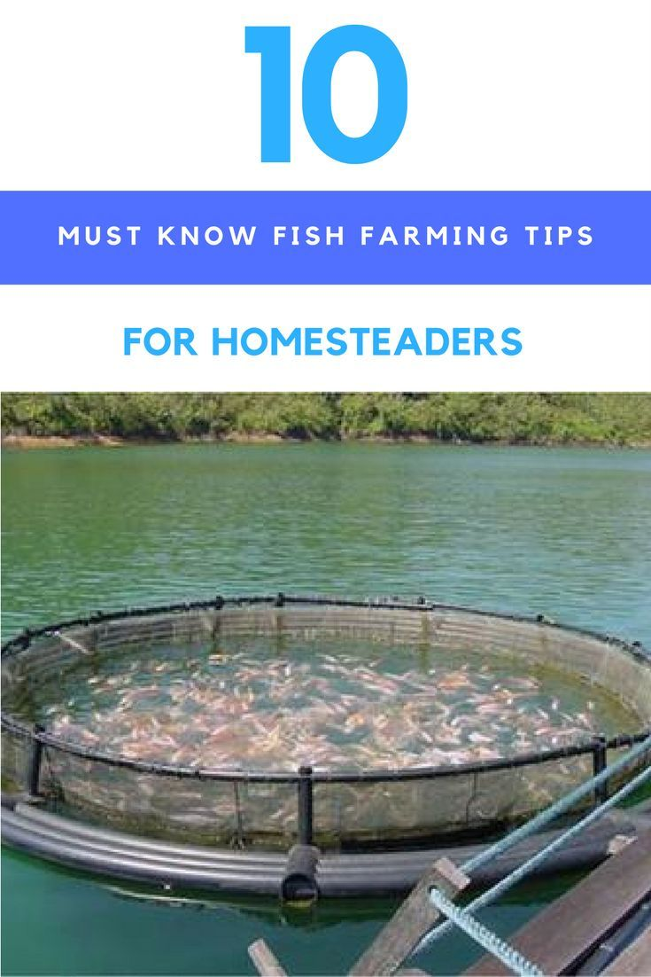 10 Must Know Fish Farming Tips For Homesteaders. | Ideahacks.com