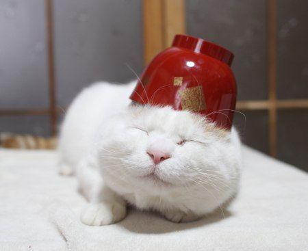 SHIRO wearing a Miso soup cup! lol   From: http://kagonekoshiro.blog86.fc2.com/