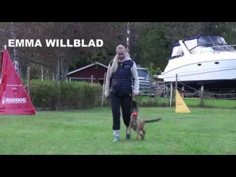 Emma Willblad in a nice obedience training with her malinois pup