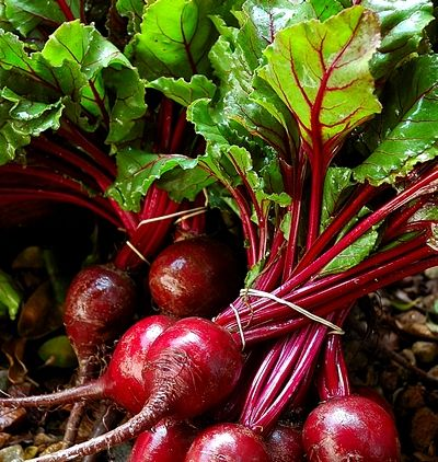 Health Benefits Beets Nutritional Values, Uses for Beets and Tops