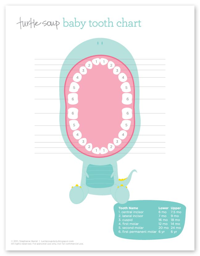 turtle soup: Baby Tooth Chart- Need to print this!