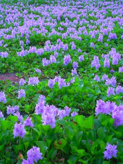 I saw the purple flowers togather with green plants. It looked natural and impressive to me.
